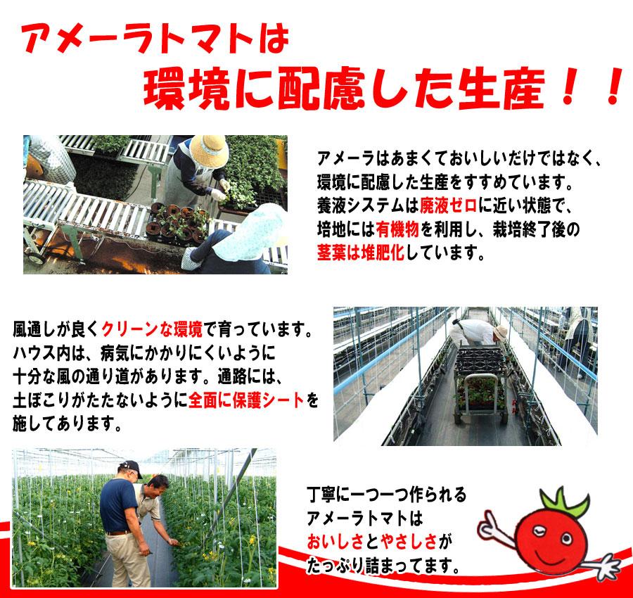ame-kankyo  tomatoTOP2