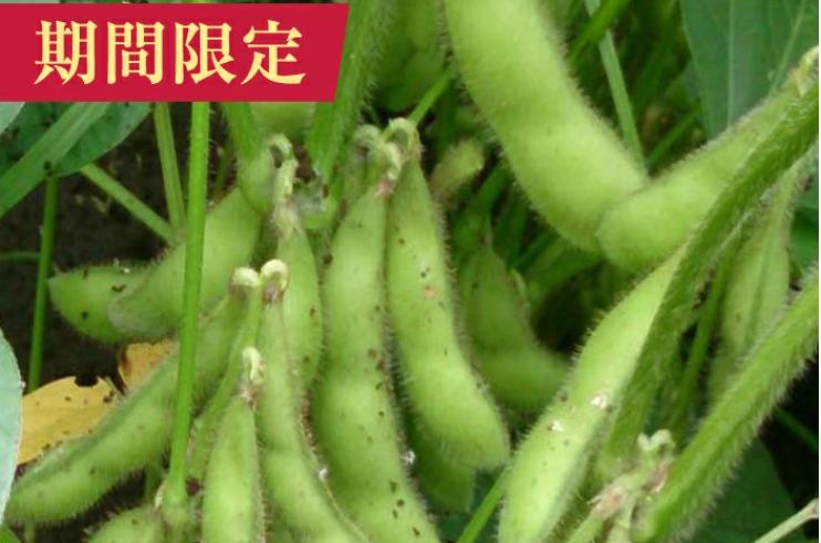 キャプチャ 枝豆2