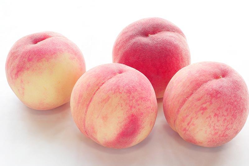 202103_product_peach_1 桃1